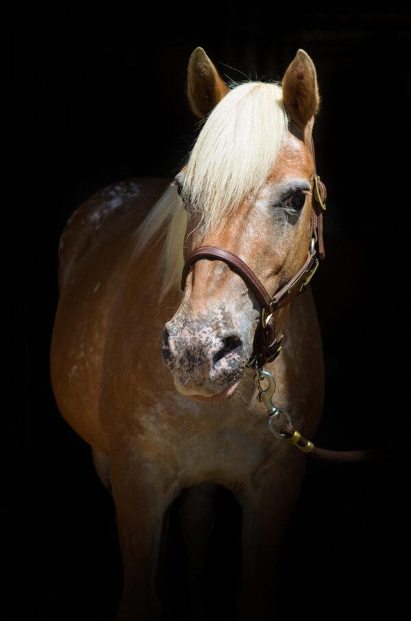 """Mustang Sally (""""Sally"""")"""