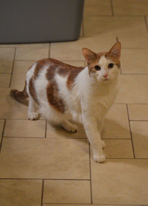 Rusty the cat